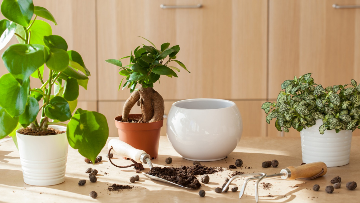 Healthy Aging Starting in your Home